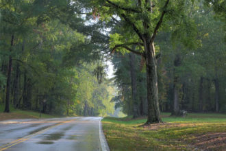 Trees on the Natchez Trace Parkway.