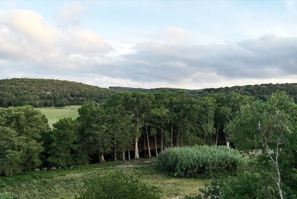 A valley of trees.